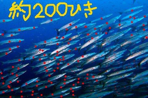26シェブロン200.JPG